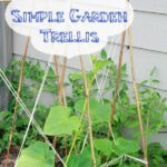 Build a Simple Trellis