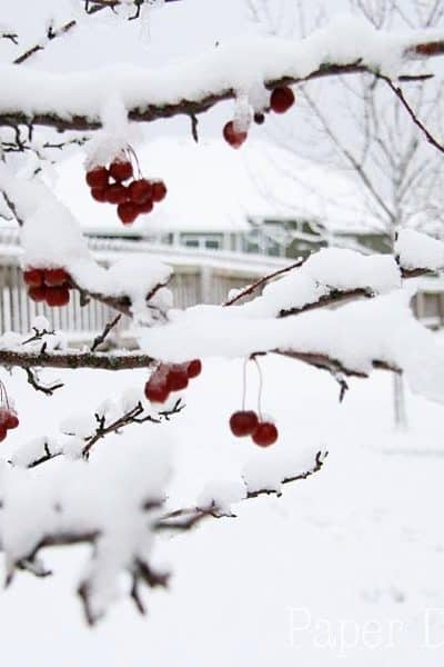 The blessings of winter