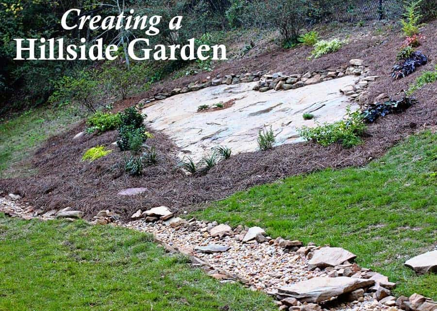 Hillside Landscape Makeover With Southern Living Plant