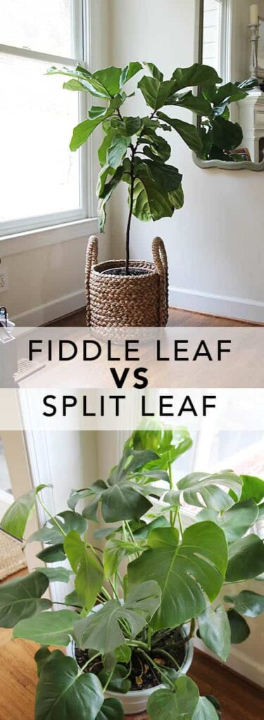 fiddlevssplit