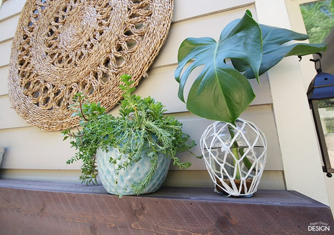 mantlecloseplant