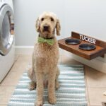 Raised Pet Feeder & Dog Days of Summer Giveaway!