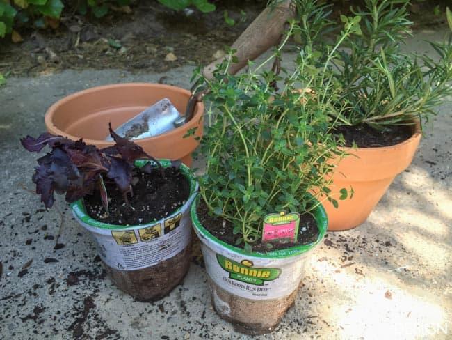 windowsill planter-6763