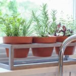 Windowsill planter