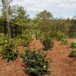 Sunny Privacy Garden with Southern Living Plants